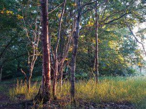 forest-school-ireland